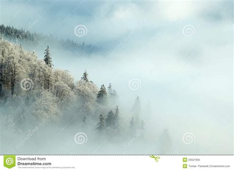 frosty forest royalty free stock frosty morning royalty free stock images image 20021959