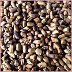 Cassia Detox Tea by Cassia Tora Detox And Slimming Ingredient