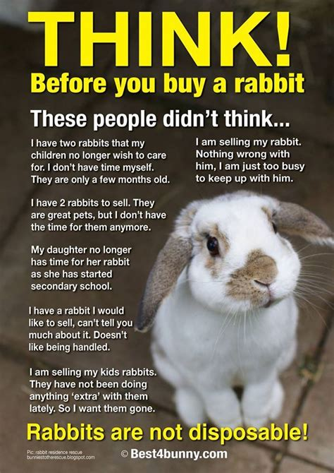 Im In Vegas With Bunnys Help 2 by 317 Best Images About Best4bunny Posters On