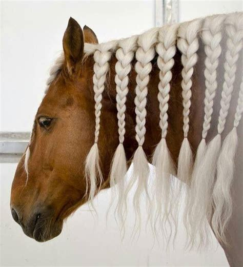 cute hairstyles for horses horses with beautiful hair beautiful horses horse hair