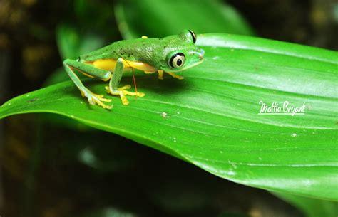 On Green green mattie bryant photography
