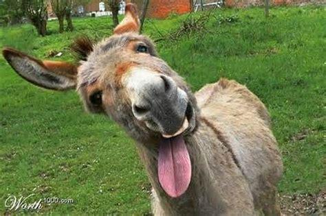 Donkey Meme - meme template search imgflip