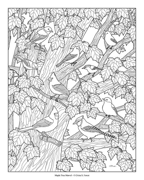 coloring pages of birds in trees quot maple tree birds adult coloring page quot by csforest redbubble