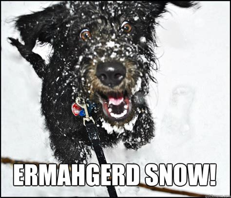 dog meme wow snow