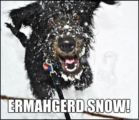 Snow Meme - dog meme wow snow