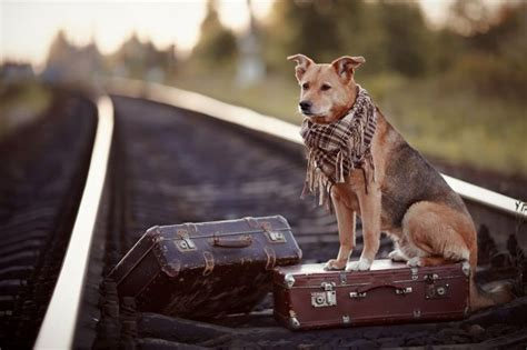 why do dogs run away why do dogs run away pet care facts