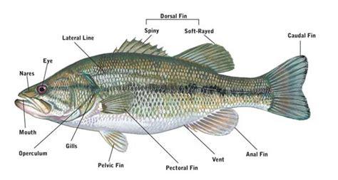 fishing terminology fish anatomy
