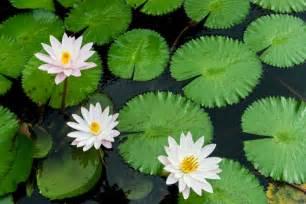 Best Low Light Aquarium Plants aquatic plant prevention strategies jenson lake mower