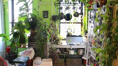 brooklyn apartment transformed  greenhouse filled