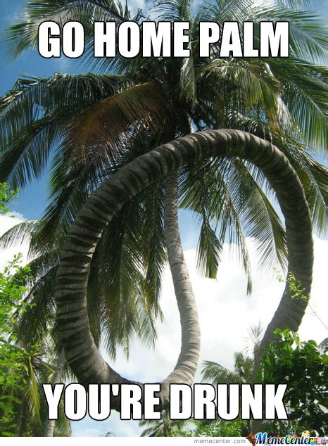palm meme palm trees memes best collection of palm trees pictures