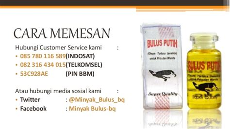 Minyak Bulus Putih Di Apotik 085780116589 indosat minyak bulus bq minyak bulus