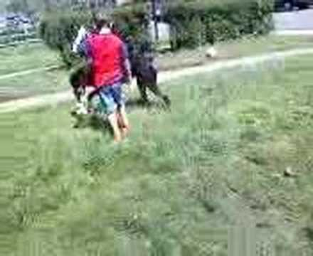 rottweiler attacks child rottweiler attacks child