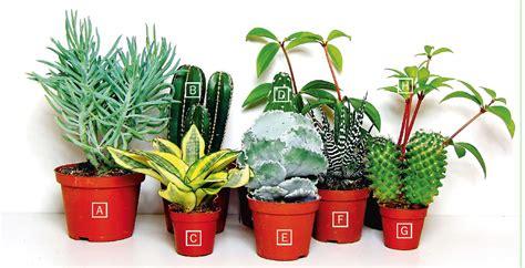 da vaso piante grasse una composizione facile cose di casa