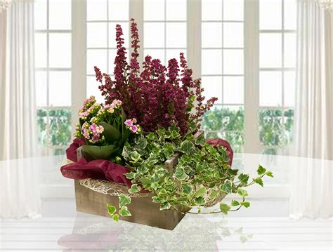 piante autunnali fiorite mauro abati fiorista web piante autunnali