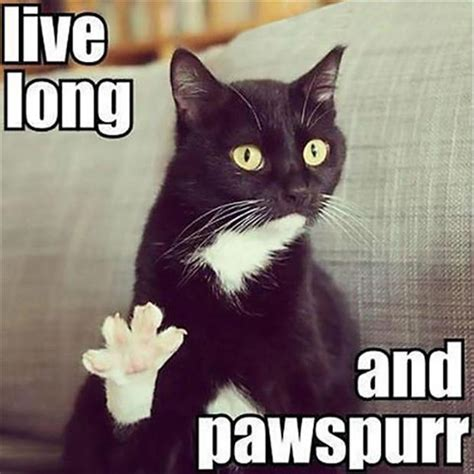 Cute Funny Cat Memes - live long and prosper funny cats dump a day