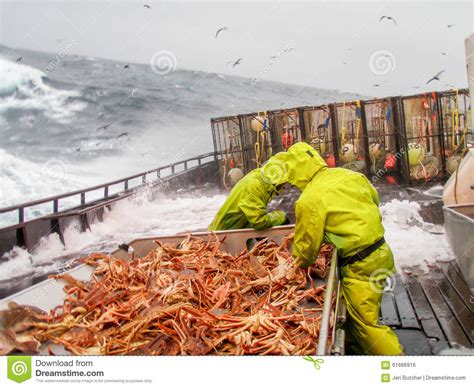 snow crab chionoecetes bairdi fishing in alaska stock