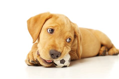 how to dogs not to chew story about chewing housemydog