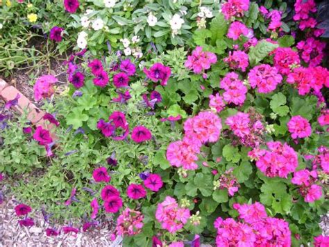 small beautiful annual flowers in bright colors jpg hi res 720p hd