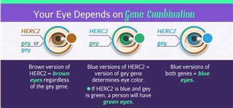 colore degli occhi diversi cosa il colore degli occhi pu 242 dirci su di noi