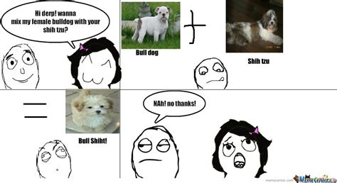 shih tzu meme what happens when you mix bull and shih tzu by digizuma11 meme center