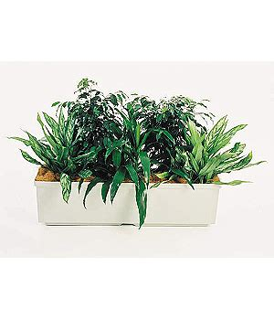 Planter Troughs Sydney by Deluxe Trough Planters Used By Office Oasis Indoor Plant