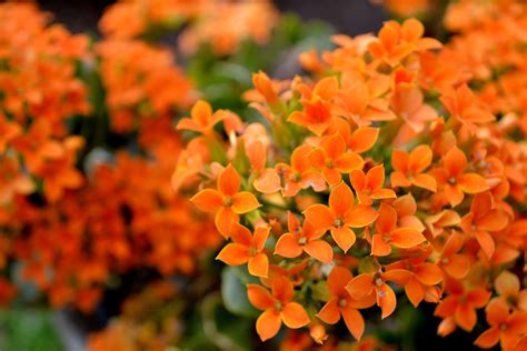 colorful flowers picture orange flowers in bloom light 1000 images about flowers orange on