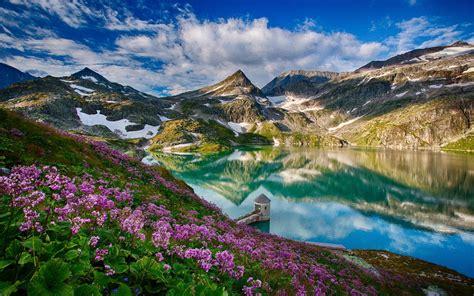 beautiful spring mountains lake flowers water
