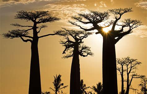 Madagascar 2015 | Viajologia Expedições