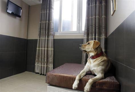 luxury pet hotel parisian actuel dogs extravaganzi