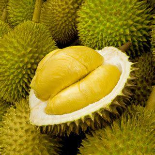 d fruit trading d24 durian