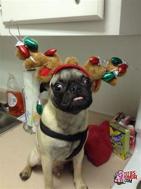 imágenes de navidad graciosas viva la navidad fotos de humor