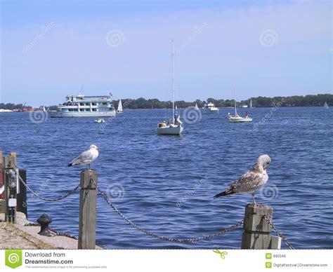 birds having a break on pier at lake ontario toronto