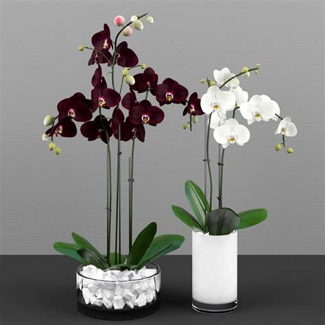 come potare le orchidee in vaso orchidea cura orchidee come curare l orchidea