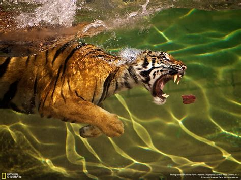 National Geographic Also Search For National Geographic 2013 Winners Photos Of Pakistan