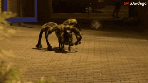 spider puppy 11 terrifying ly hilarious costumes rover