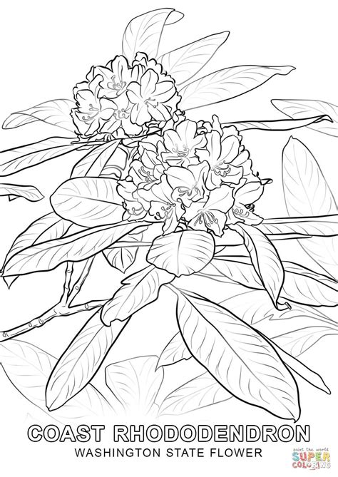 washington state flower coloring page free printable