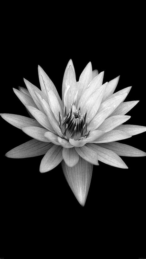 PAPERS.co | iPhone wallpaper | ae89-dark-flower-black