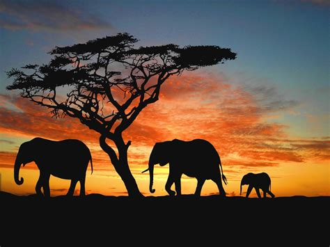 wallpaper desktop elephant african elephant wallpapers wallpaper cave