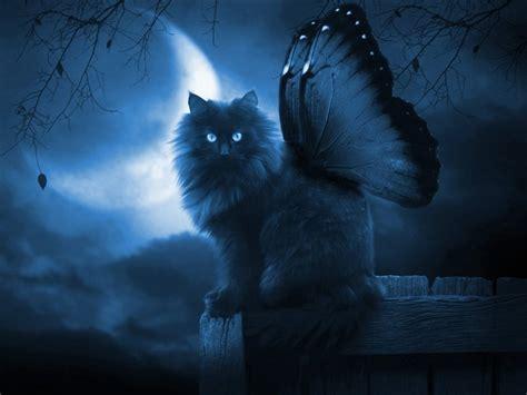 Butterfly P cat wallpaper 549317 butterfly p ufaimw jpg