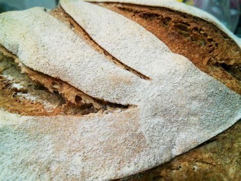 di grani antichi e pane con pasta madre pane con farina di miglio e russello pasta madre lover pane a lievitazione naturale e