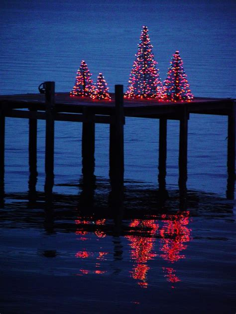 i love christmas trees on the dock