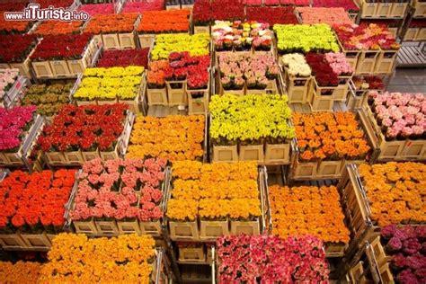 ci di fiori in olanda asta dei fiori di naaldwijk olanda foto naaldwijk