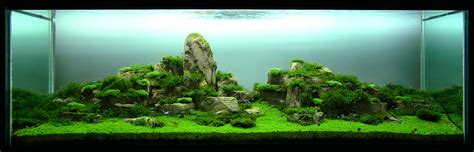 aquascaping world aquascape world 28 images aquascapes download images