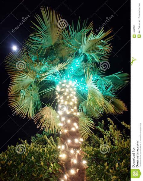 christmas palm tree christmas lights decoration