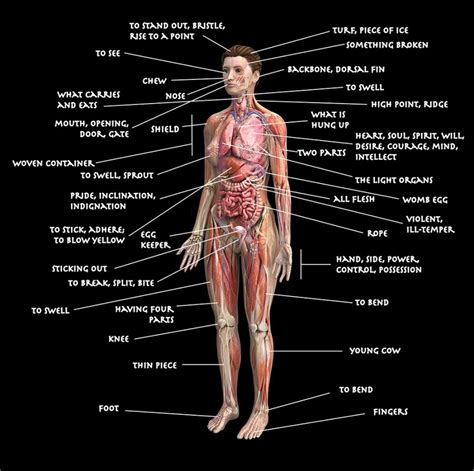 Detox Meaning In Tamil by Printable Diagram Of The Human Diagram Site