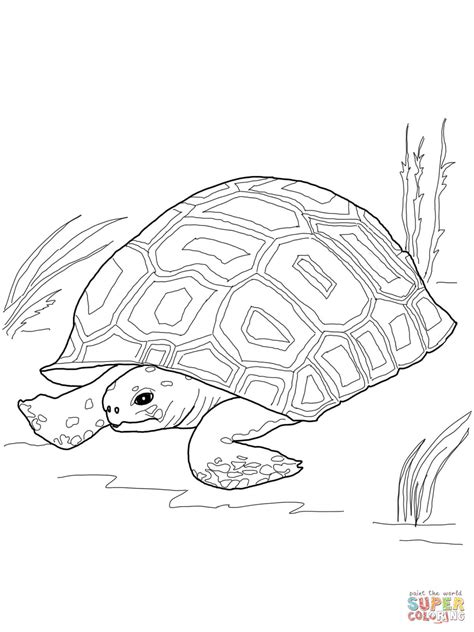 land turtle coloring page gopher tortoise coloring page free printable coloring pages