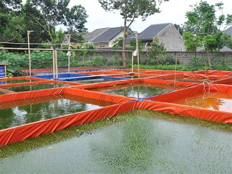 Bibit Lele Di Aceh anda bisnis ikan lele inilah cara membuat pelet ikan lele sendiri info peluang bisnis ukm