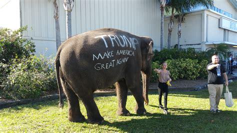donald trump elephant exploring the trump phenomenon bearing drift