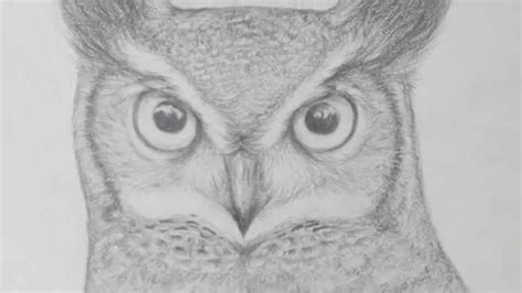 pencil owl drawing youtube