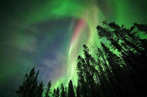 northern lights trees northern lights and trees trees and other